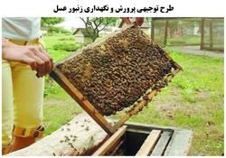 طرح توجیهی پرورش و نگهداری زنبور عسل